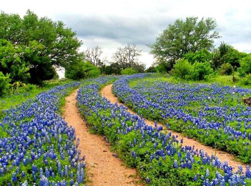 Texas Wildflower Drives Dos Rios