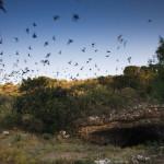 eckert james river bat cave